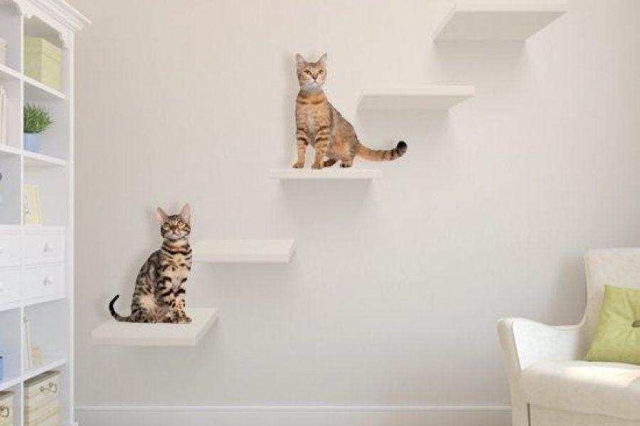 ออกแบบบ้านอย่างไรเอาใจทาสแมว